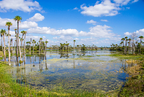 Environmental Consulting in Florida